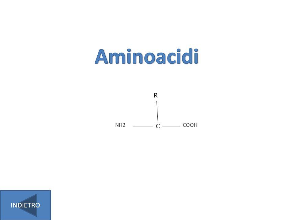 Aminoacidi NH2 C COOH R INDIETRO