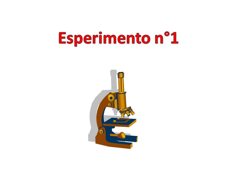 Esperimento n°1