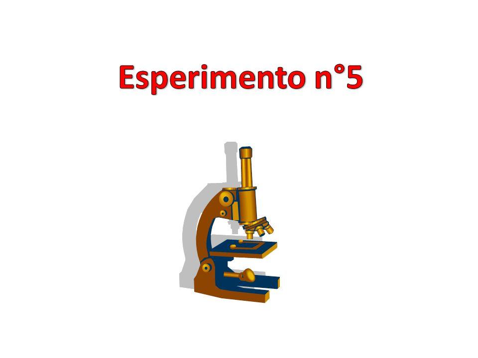 Esperimento n°5