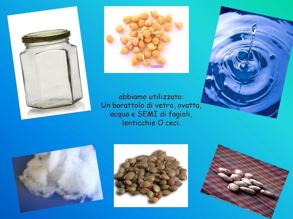 abbiamo utilizzato: Un barattolo di vetro, ovatta, acqua e SEMI di fagioli, lenticchie O ceci.