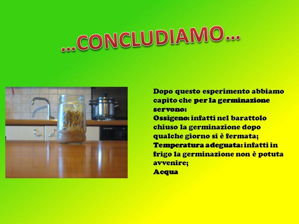 …CONCLUDIAMO… Dopo questo esperimento abbiamo capito che per la germinazione servono: