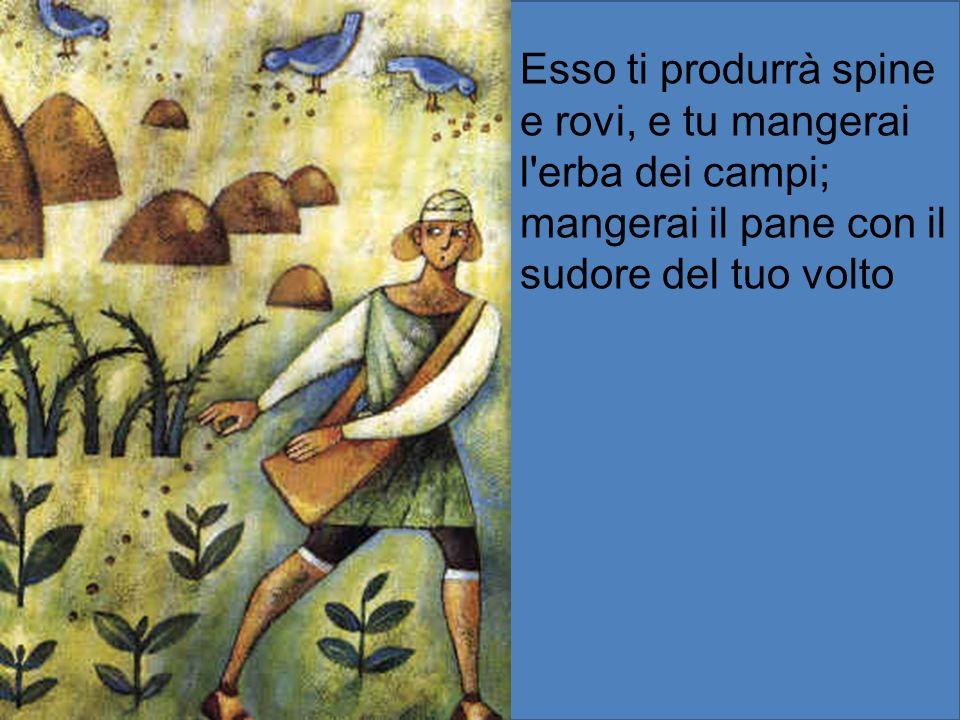 Esso ti produrrà spine e rovi, e tu mangerai l erba dei campi;