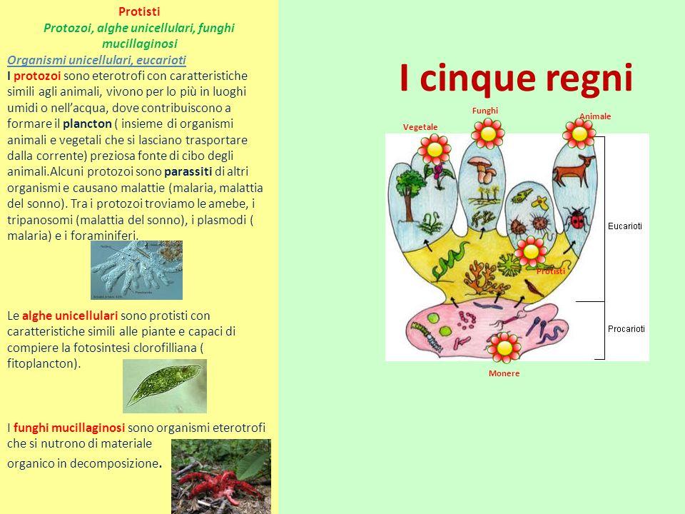 Protozoi, alghe unicellulari, funghi mucillaginosi