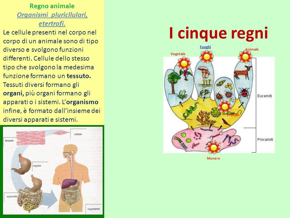 Organismi pluricllulari, etertrofi.