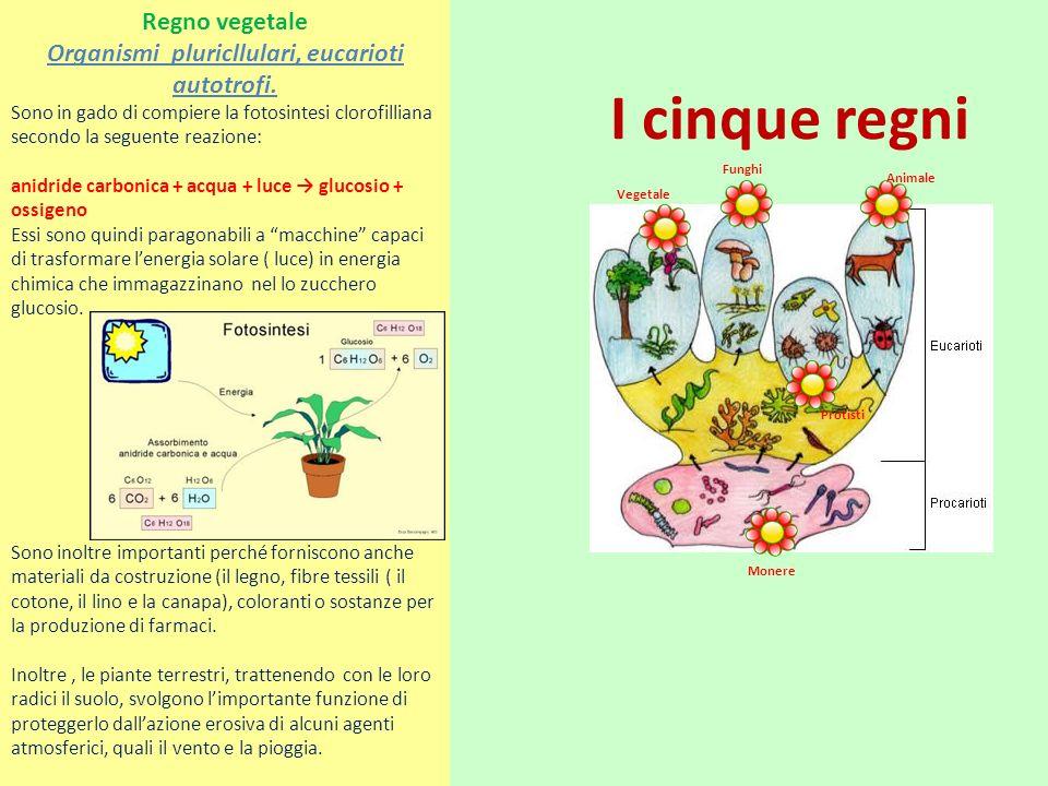 Organismi pluricllulari, eucarioti autotrofi.