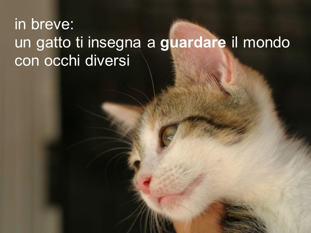in breve: un gatto ti insegna a guardare il mondo con occhi diversi