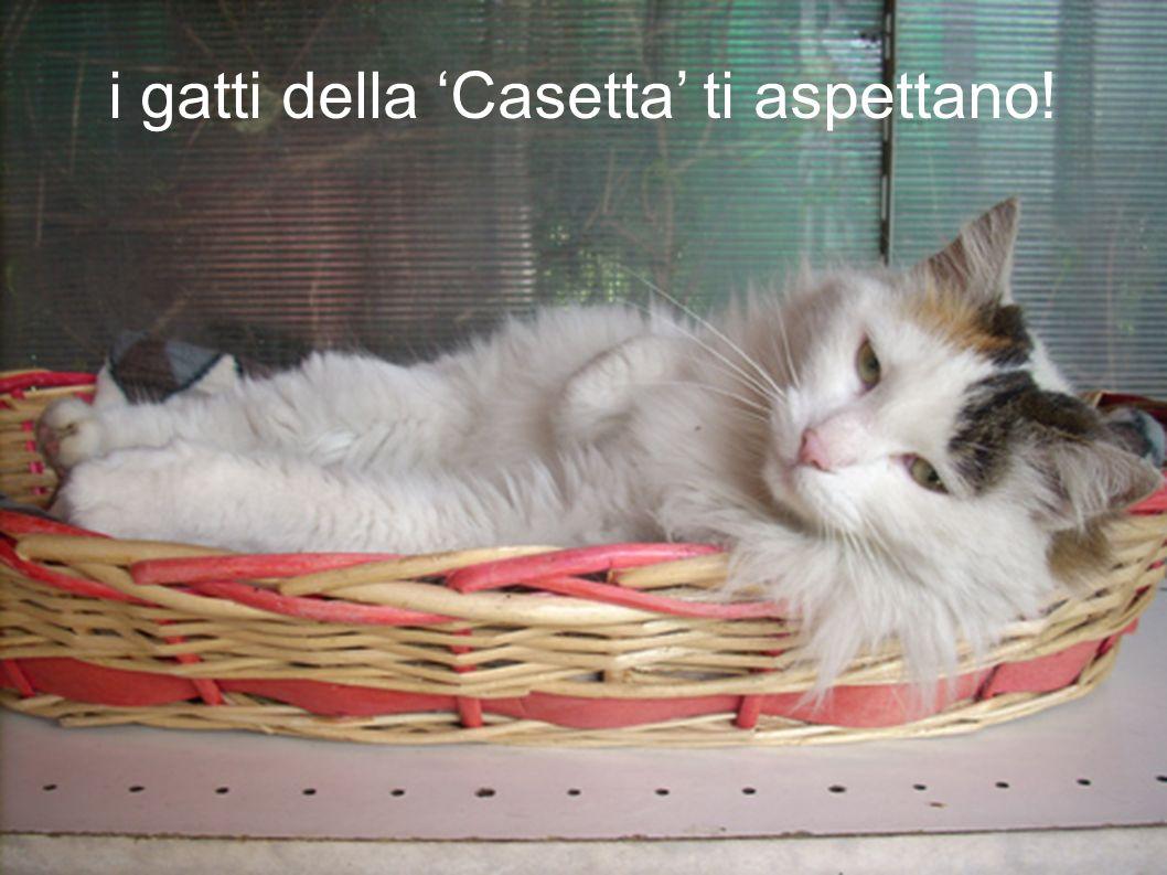i gatti della 'Casetta' ti aspettano!