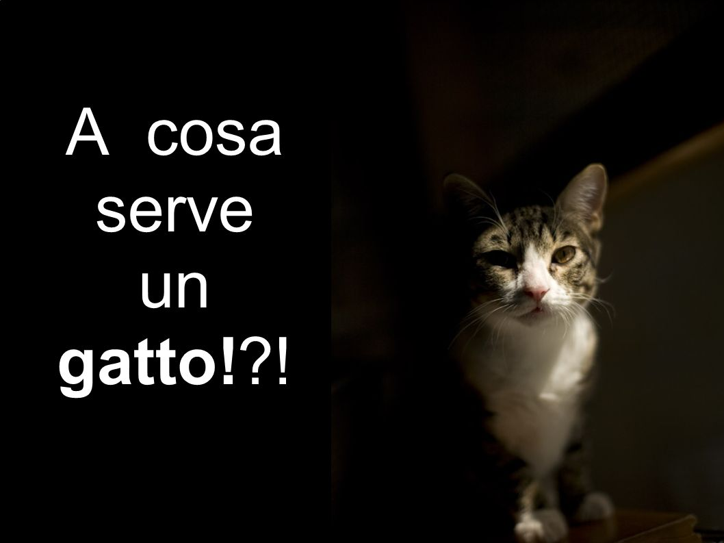 A cosa serve un gatto! !
