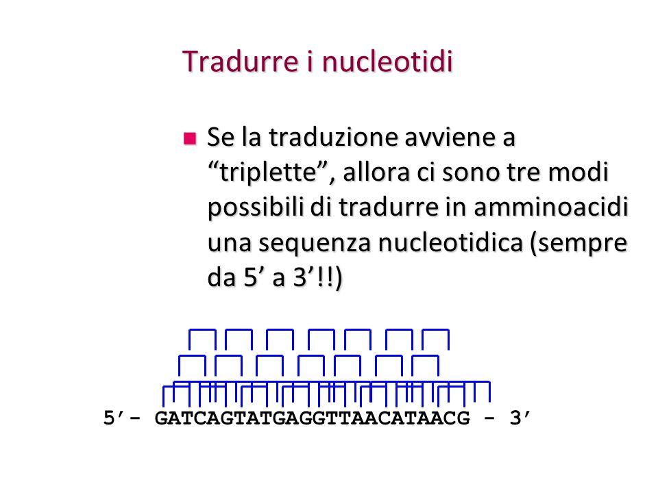 Tradurre i nucleotidi
