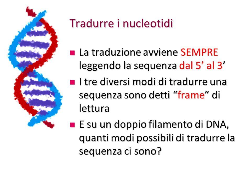 Tradurre i nucleotidi La traduzione avviene SEMPRE leggendo la sequenza dal 5' al 3'