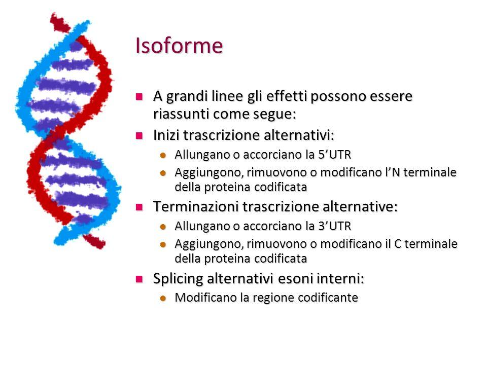 Isoforme A grandi linee gli effetti possono essere riassunti come segue: Inizi trascrizione alternativi: