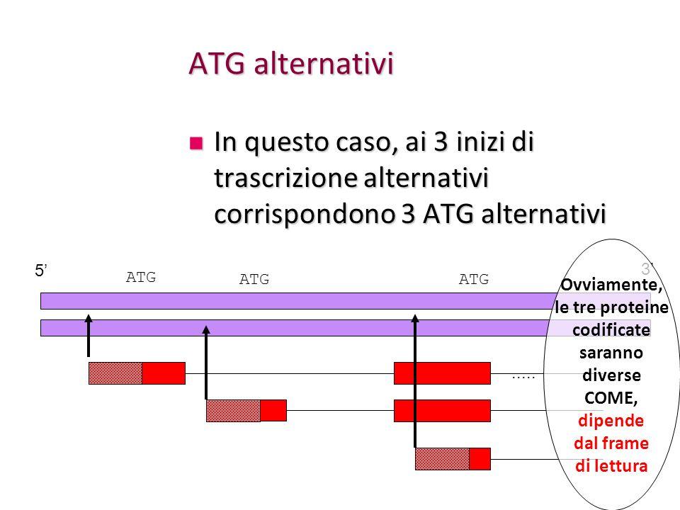 ATG alternativi In questo caso, ai 3 inizi di trascrizione alternativi corrispondono 3 ATG alternativi.