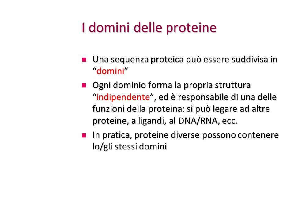 I domini delle proteine
