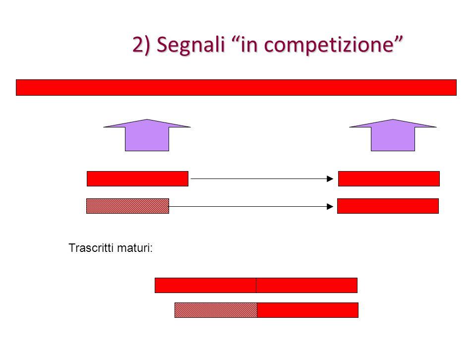 2) Segnali in competizione