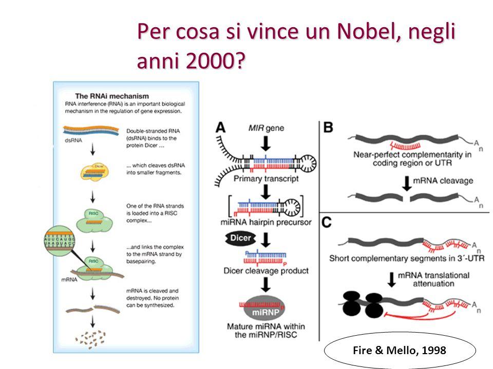 Per cosa si vince un Nobel, negli anni 2000
