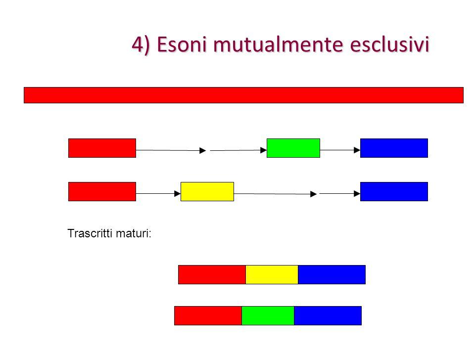 4) Esoni mutualmente esclusivi