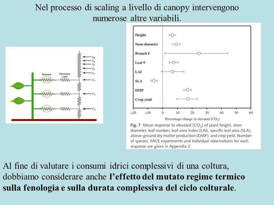 Nel processo di scaling a livello di canopy intervengono numerose altre variabili.