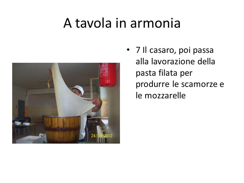A tavola in armonia 7 Il casaro, poi passa alla lavorazione della pasta filata per produrre le scamorze e le mozzarelle.