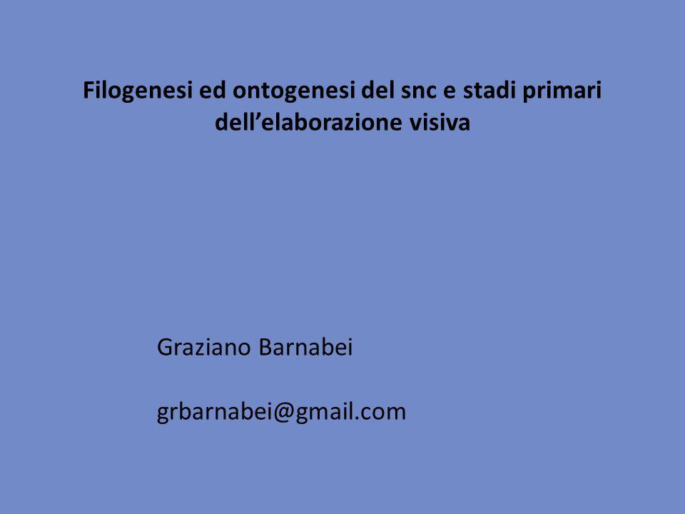 Filogenesi ed ontogenesi del snc e stadi primari dell'elaborazione visiva