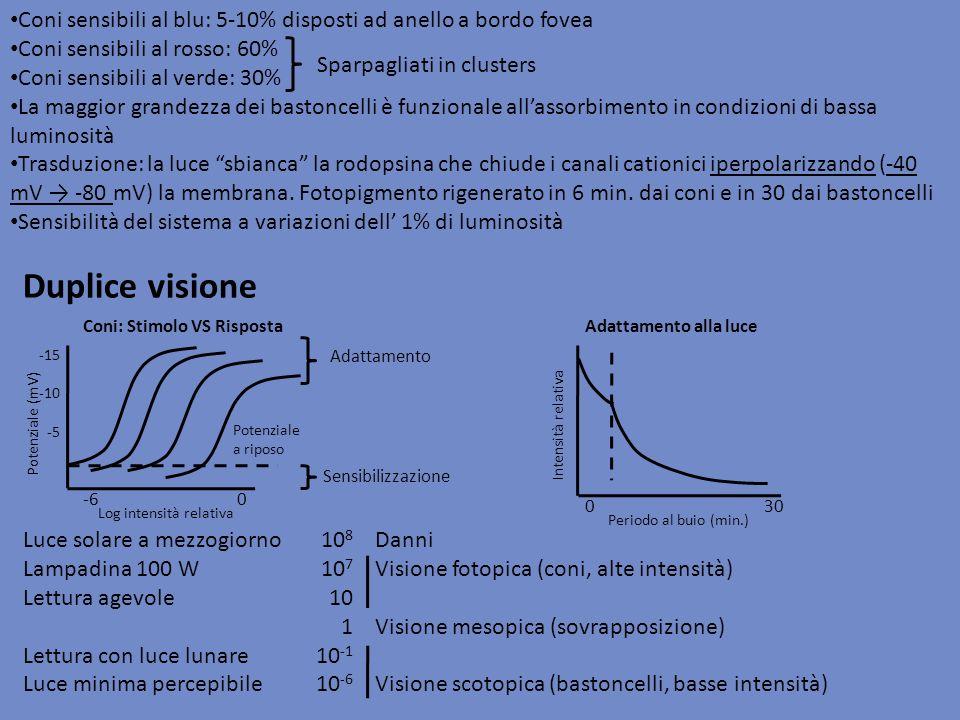 Coni sensibili al blu: 5-10% disposti ad anello a bordo fovea