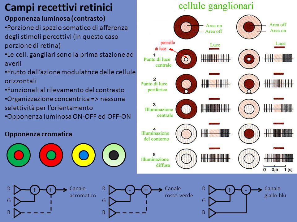 Campi recettivi retinici