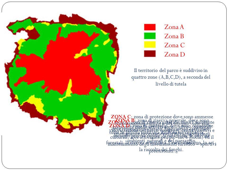 Zona A Zona B Zona C Zona D