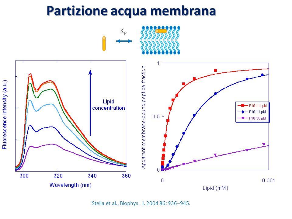 Stella et al., Biophys . J. 2004 86: 936–945.