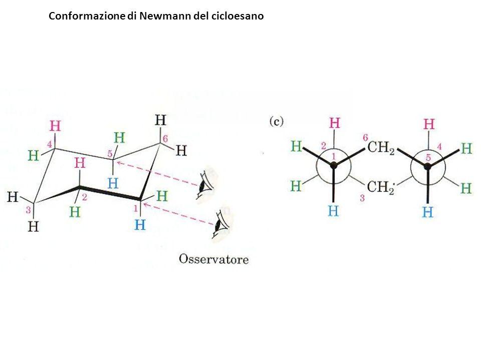 Conformazione di Newmann del cicloesano