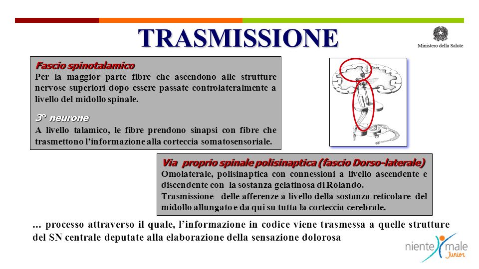 TRASMISSIONE Fascio spinotalamico.