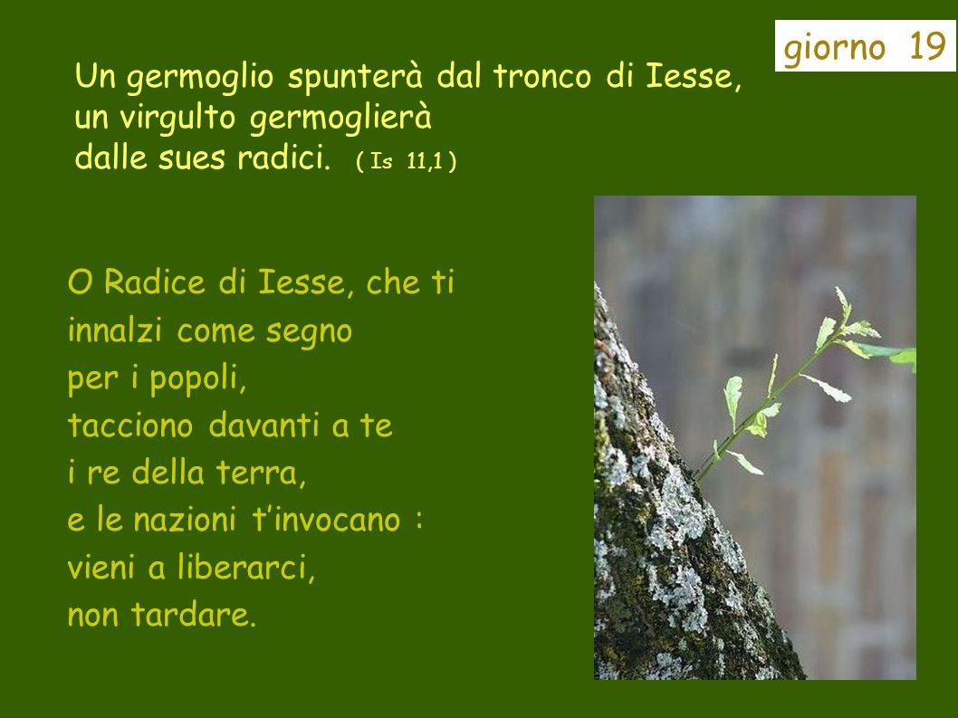 giorno 19 Un germoglio spunterà dal tronco di Iesse, un virgulto germoglierà dalle sues radici. ( Is 11,1 )