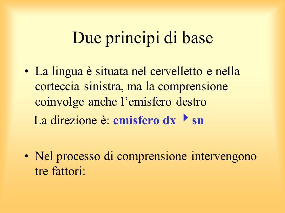 Due principi di base La lingua è situata nel cervelletto e nella corteccia sinistra, ma la comprensione coinvolge anche l'emisfero destro.