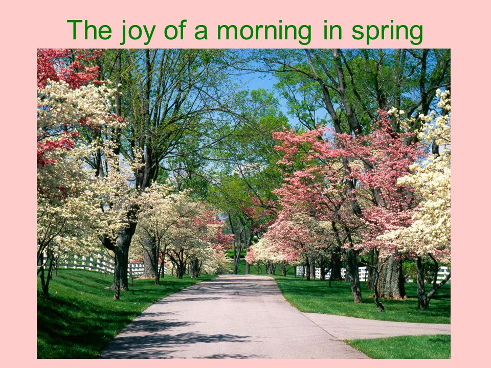 The joy of a morning in spring