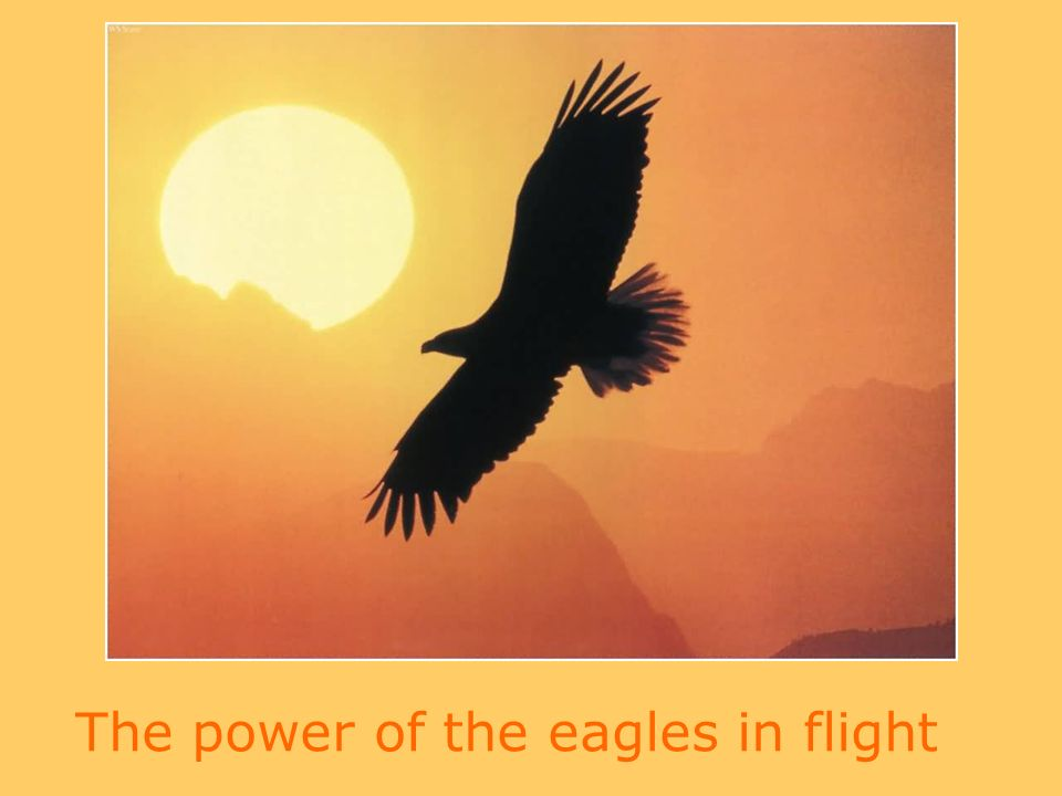 The power of the eagles in flight