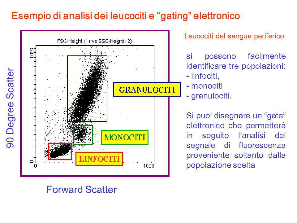 Leucociti del sangue periferico