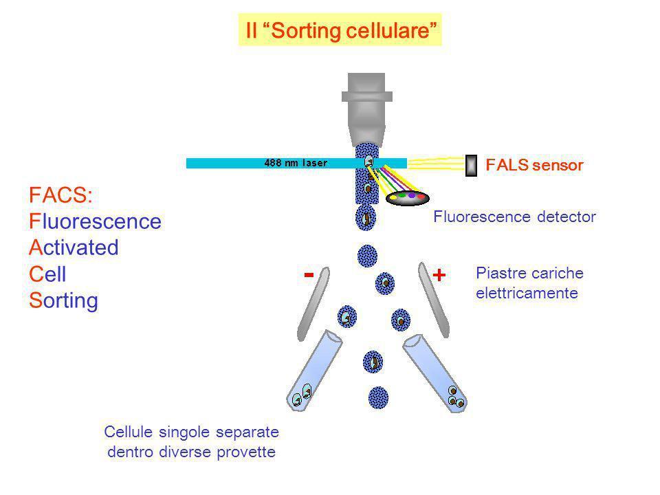 Cellule singole separate dentro diverse provette