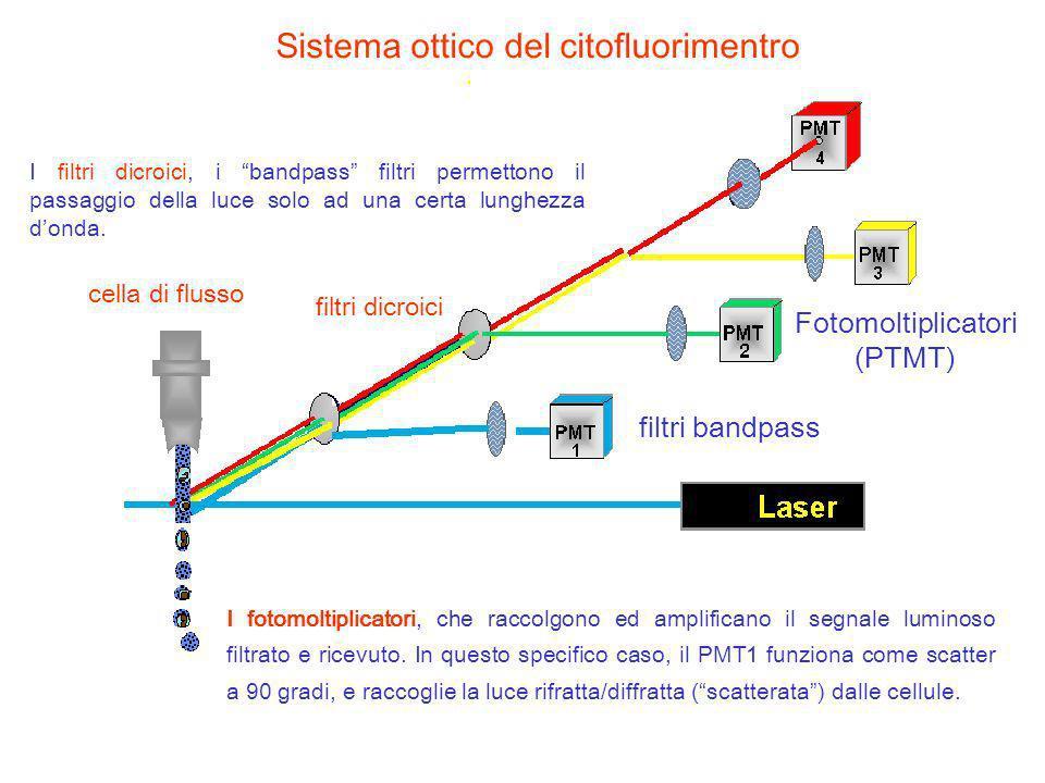 Sistema ottico del citofluorimentro