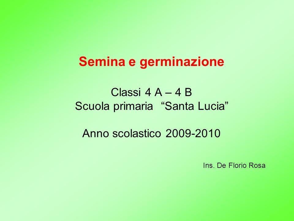Semina e germinazione Classi 4 A – 4 B Scuola primaria Santa Lucia Anno scolastico 2009-2010