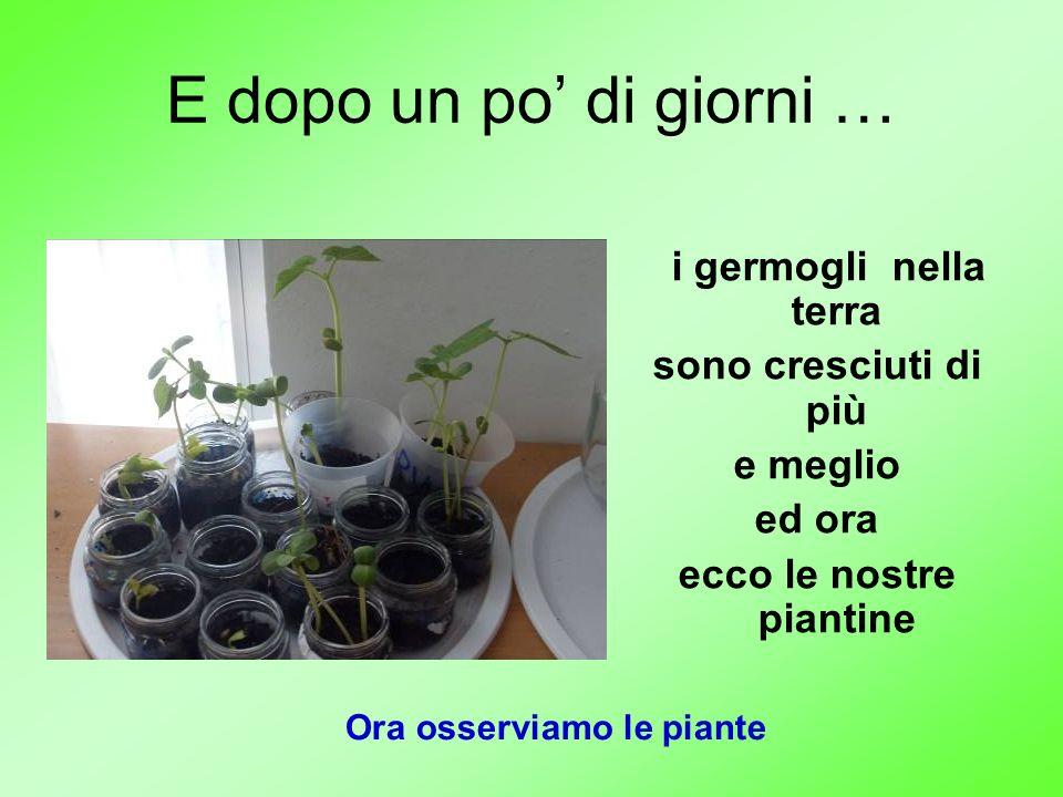 Ora osserviamo le piante