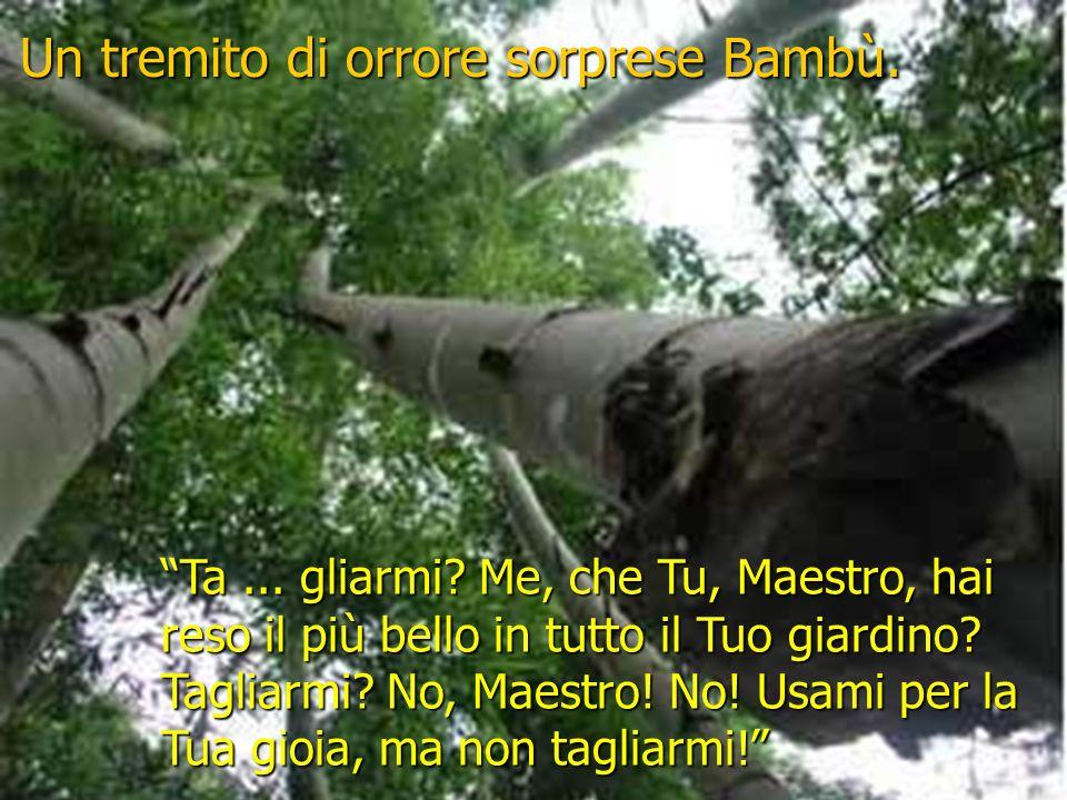 Un tremito di orrore sorprese Bambù.