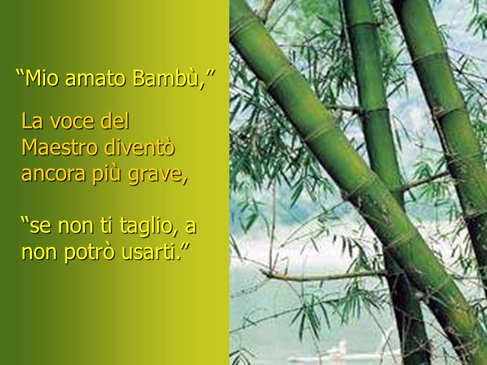 Mio amato Bambù, La voce del Maestro diventò ancora più grave, se non ti taglio, a.