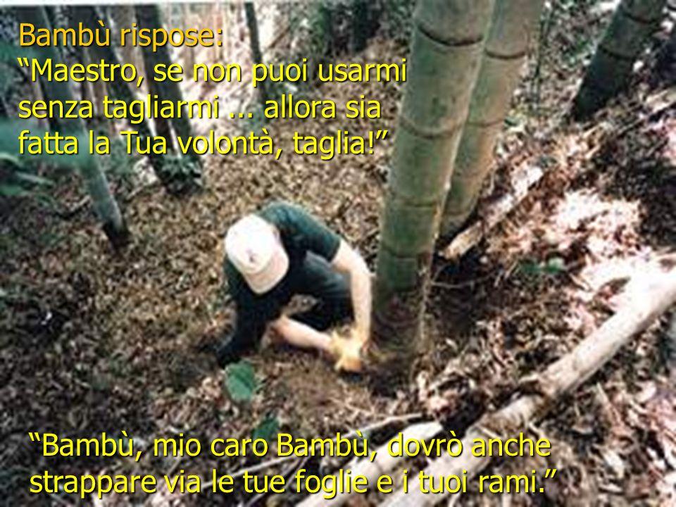 Bambù rispose: Maestro, se non puoi usarmi senza tagliarmi ... allora sia fatta la Tua volontà, taglia!