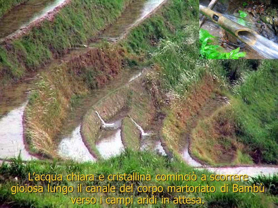 L'acqua chiara e cristallina cominciò a scorrere gioiosa lungo il canale del corpo martoriato di Bambù verso i campi aridi in attesa.