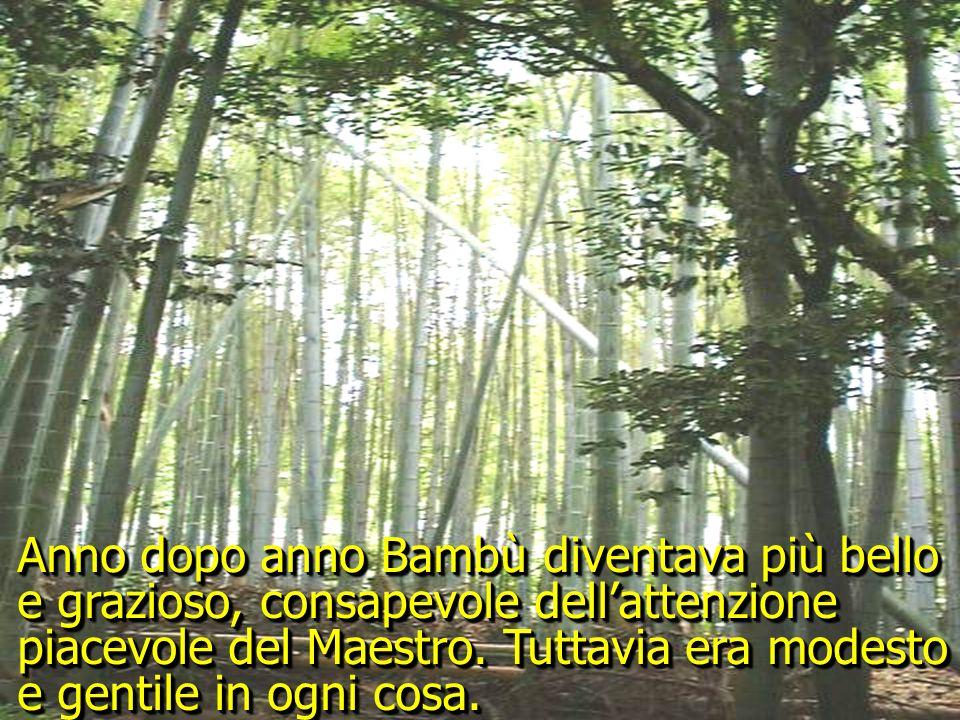 Anno dopo anno Bambù diventava più bello e grazioso, consapevole dell'attenzione piacevole del Maestro.