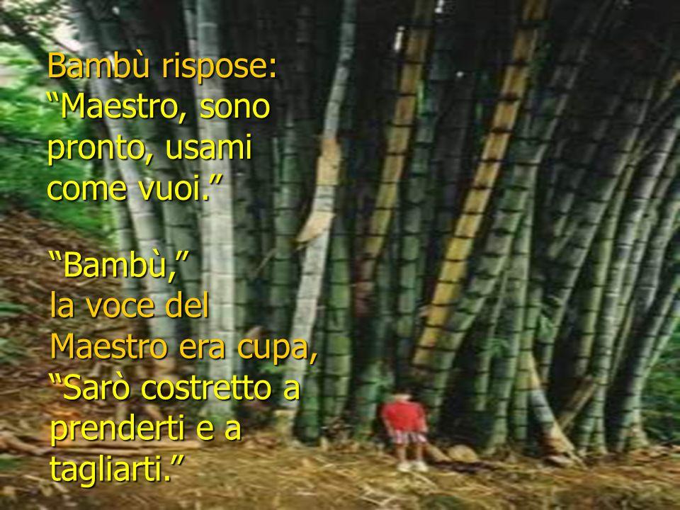 Bambù rispose: Maestro, sono pronto, usami come vuoi.