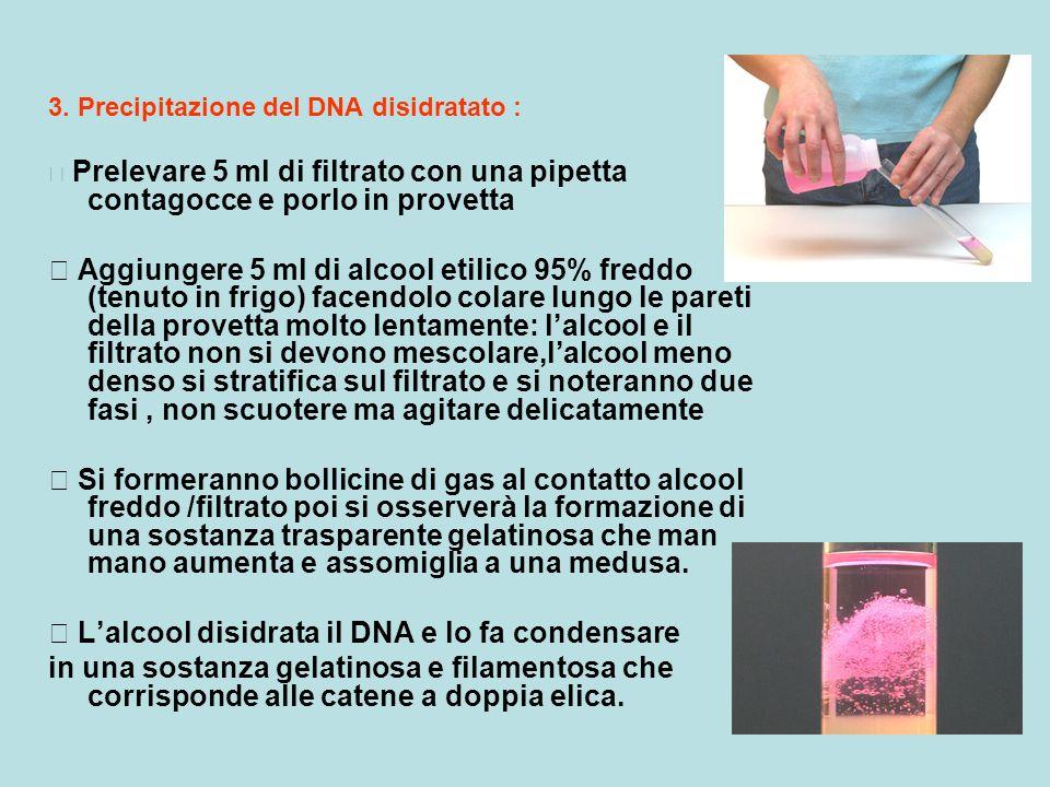  L'alcool disidrata il DNA e lo fa condensare