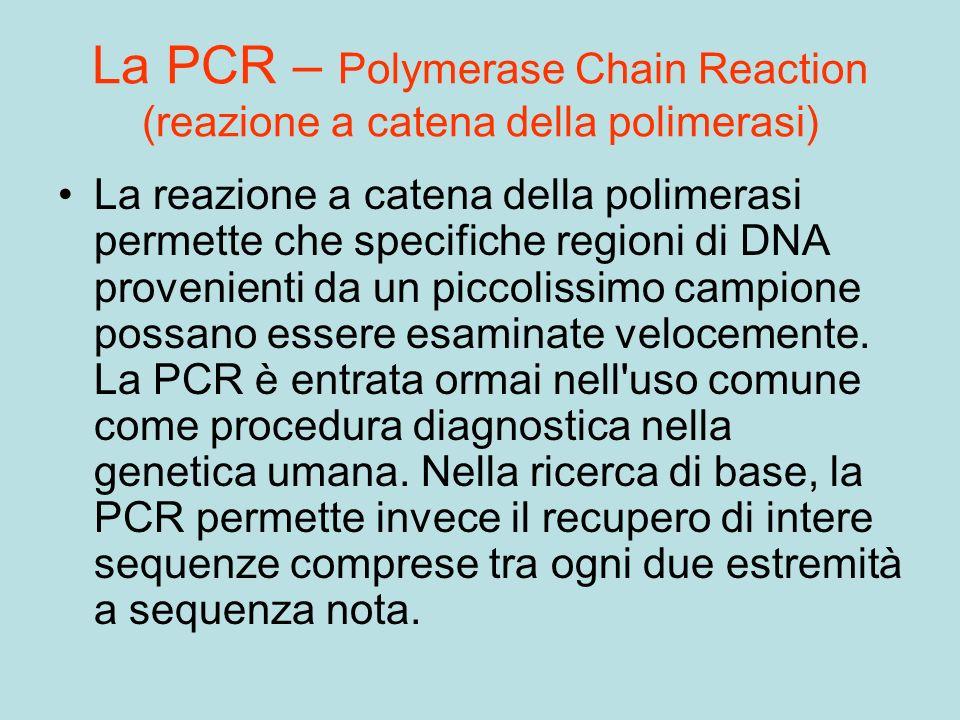 La PCR – Polymerase Chain Reaction (reazione a catena della polimerasi)