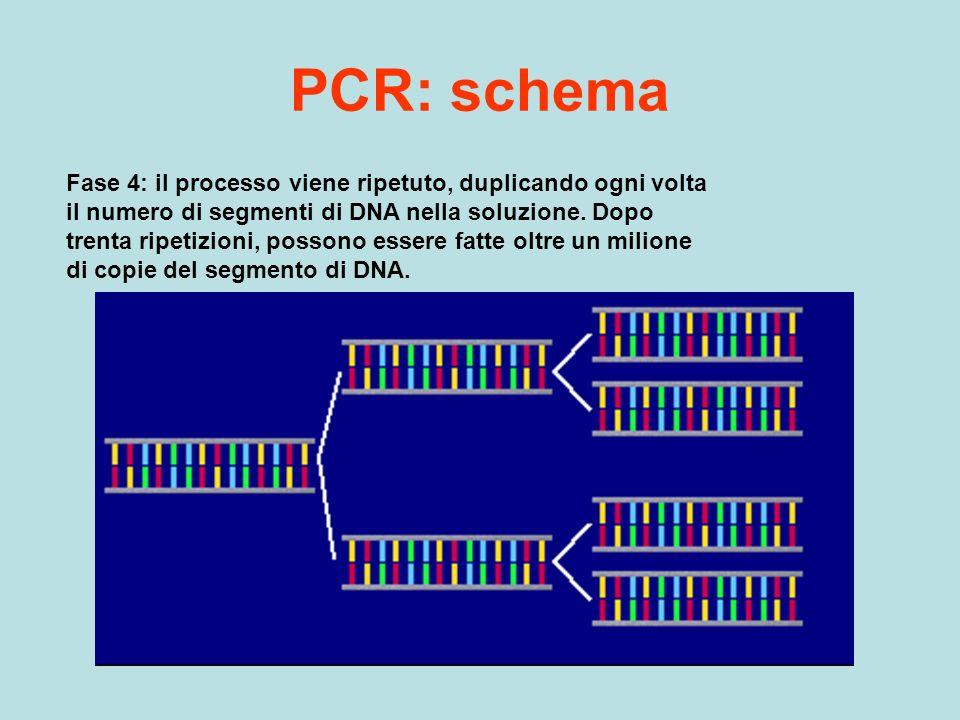PCR: schema