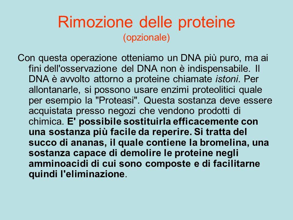 Rimozione delle proteine (opzionale)