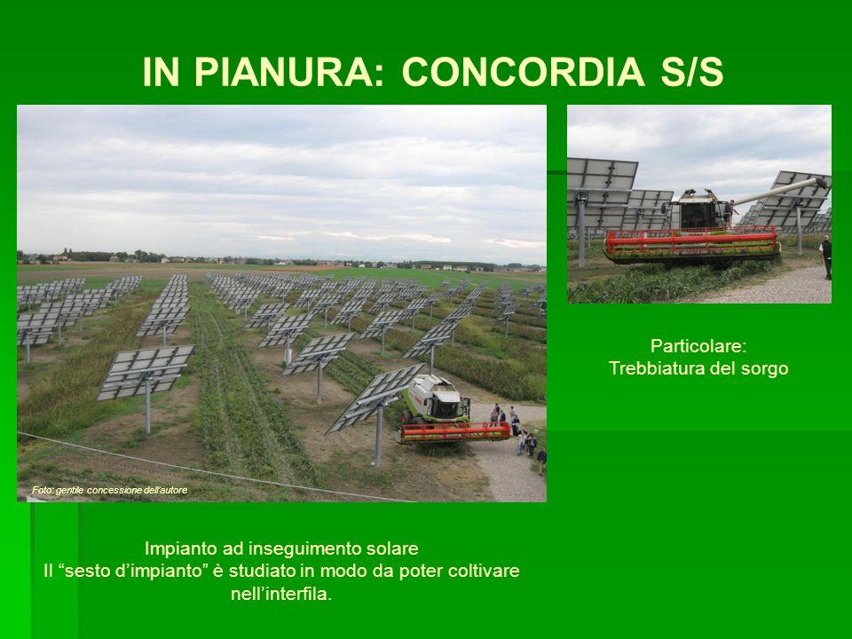IN PIANURA: CONCORDIA S/S