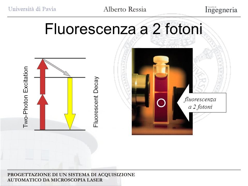 Fluorescenza a 2 fotoni Two-Photon Excitation Fluorescent Decay